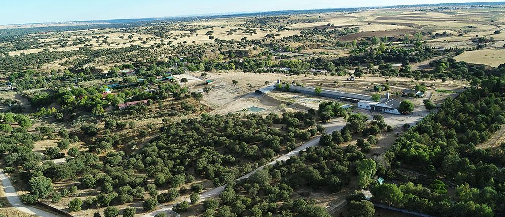 Vista aérea de Kalmanimal